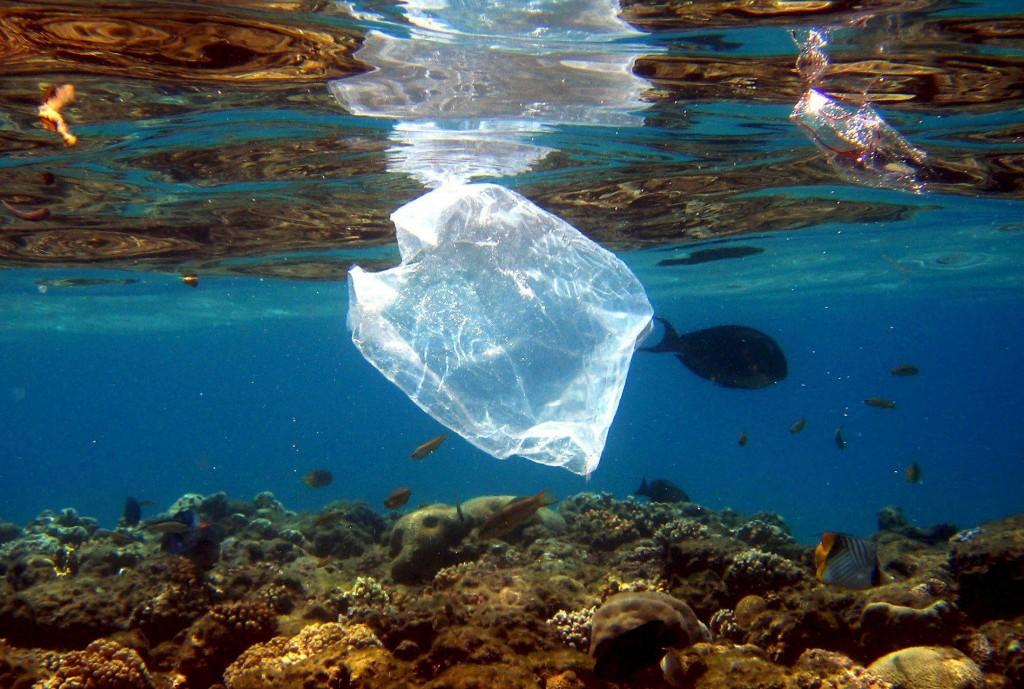 Autoridades alertan sobre el daño que producen bolsas y desechos plásticos en océanos