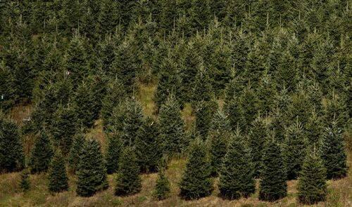 Plantaciones forestales: ¿La marea verde que amenaza Aysén?