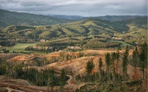 Desde un modelo forestal anticuado hacia la protección de ecosistemas vegetacionales