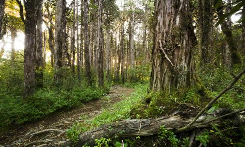 Reserva de alerces se convierte en el primer proyecto de carbono con certificación internacional en Chile