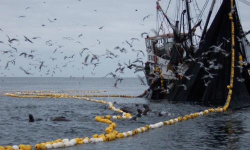 Chile, Perú y Ecuador crearán frente internacional para evitar la pesca ilegal