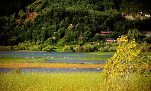 Los esfuerzos para controlar el luchecillo en el Lago Lanalhue