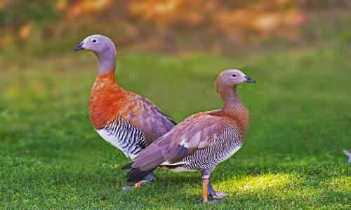 Pequeña ave en peligro de extinción ganó en tribunales