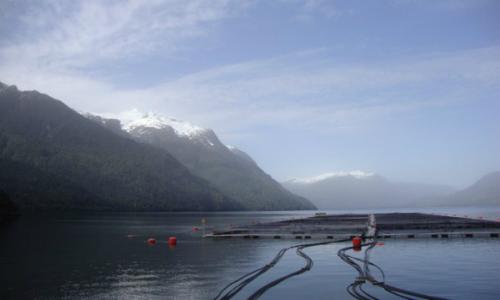 Avance de salmoneras a Magallanes podrían devastar el océano de la Patagonia