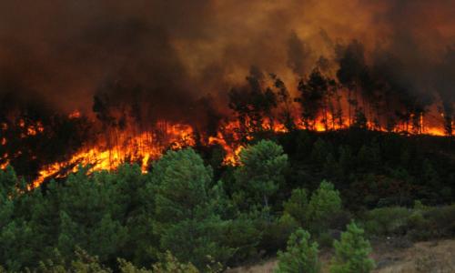 Incendio forestal en Colina: Más de 850 hectáreas consumidas