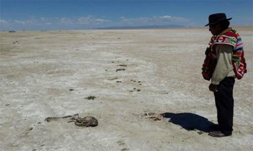 Desastre ecológico: El segundo lago más grande de Bolivia está casi seco