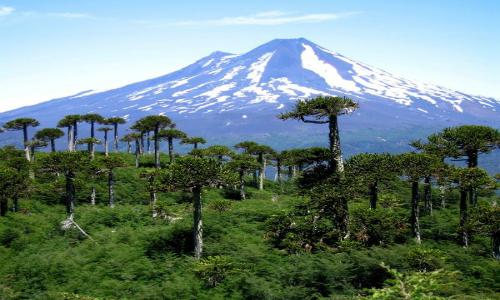 Bienvenidos a los Parques Nacionales: Ayúdenos a Conservar y Proteger la Naturaleza de Chile