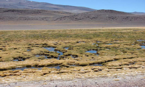 SMA sanciona a minera Maricunga por daño ambiental irreparable a humedales