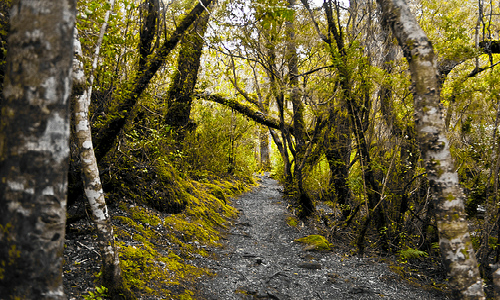 Organizaciones y parlamentarios reiteran necesidad de crear el Servicio Nacional Forestal