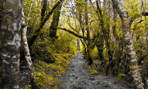 Lanzamiento Libro: Silvicultura en Bosques Nativos