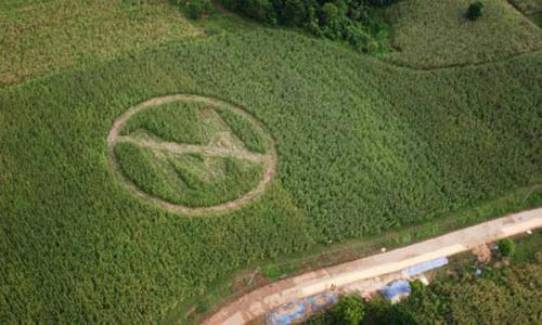 En Paine Monsanto ataca de nuevo