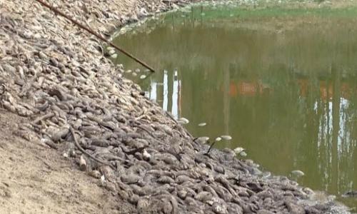 San Antonio: Desastre ecológico en El Tranque de San Juan no tiene control