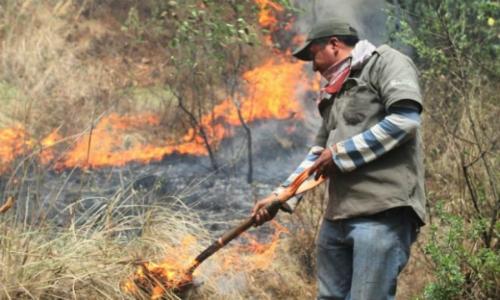 Plan de descontaminación en Los Ángeles: anteproyecto propone modificar quemas agrícolas