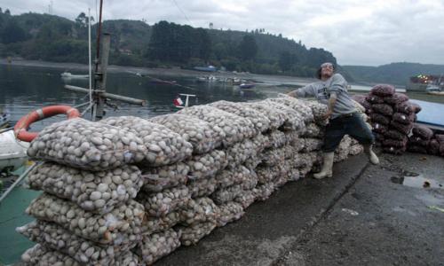 Marea Roja: La historia y los efectos que está causando este fenómeno en las costas de Chiloé