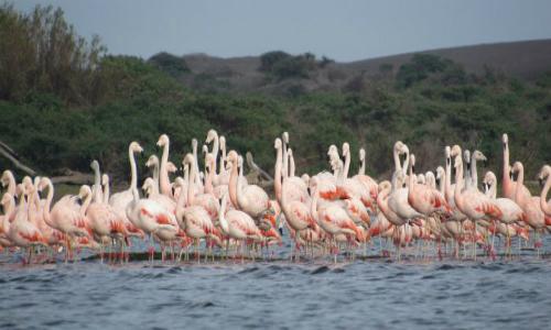 Pescadores emprenden proyecto de observación de aves en el río Mataquito