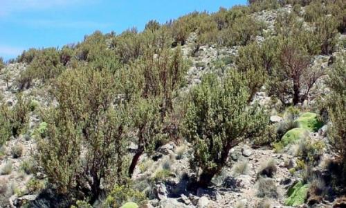 El extremo superior del Norte Grande tiene más vegetación que desierto