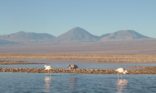 Comisión Sesionará en Salar de Atacama para determinar daño ambiental de minería