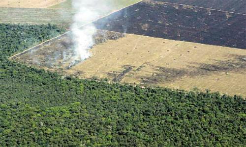 FAO: Agricultura comercial generó casi el 70 % de la deforestación en América Latina