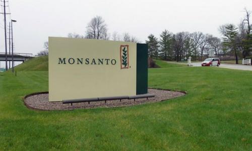 Recomiendan aprobar millonario proyecto de semillas transgénicas de Monsanto