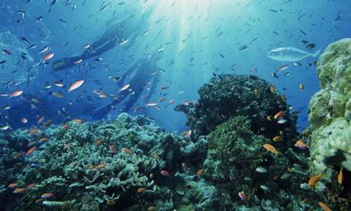 Ministerio del Medio Ambiente oficializa la creación de Parque Marino Nazca Desventuradas
