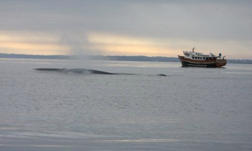 Dos proyectos portuarios amenazan a reservas marinas chilenas