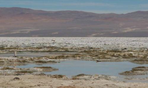 SQM sin respiro: nueva querella le mete presión por presuntas irregularidades en el Salar de Llamara