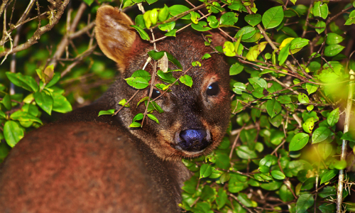 Piden retirar del Senado proyecto que crea servicio de la biodiversidad y áreas protegidas