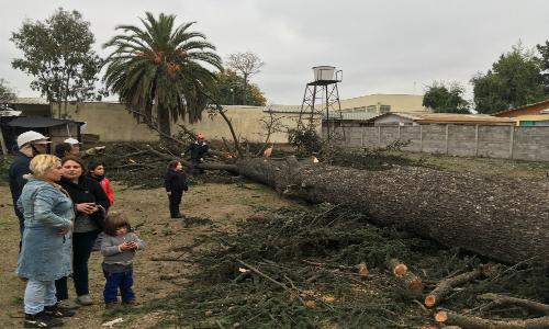 El conflicto siempre latente entre vecinos y municipios por la tala de árboles