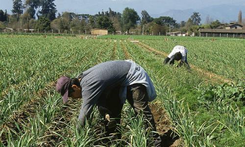 Agricultores insisten en que reforma al Código de Aguas atenta contra patrimonio productivo del país