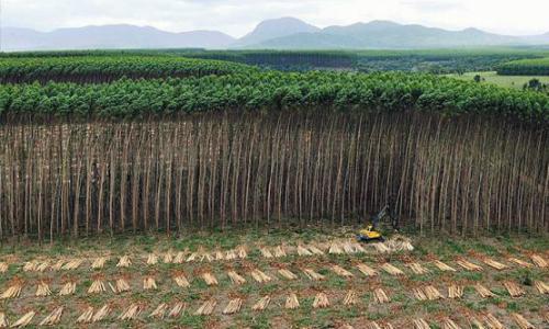 Consejo de Política Forestal discute nuevo protocolo para regular plantaciones