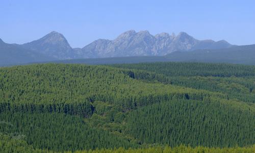 Consejo de Política Forestal estudia plan para recuperar patrimonio afectado por incendios