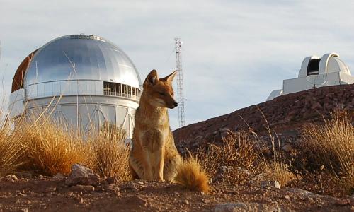 Conmemorarán Hora del Planeta con observación astronómica en La Serena
