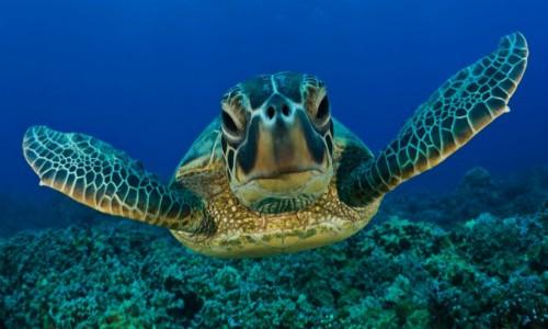 """Gobierno dice estar """"atento"""" por proyecto que se ubicaría en zona de tortugas"""