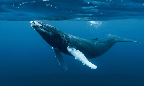 Día Mundial de los Océanos: Nuestros océanos, nuestro futuro