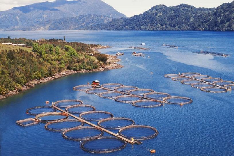 Pesca: Gobierno envía proyecto para destrabar relocalización de concesiones