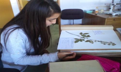 Herbario porteño se integra al mundo