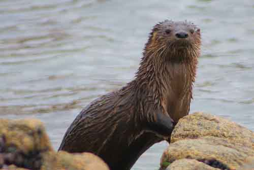 Especies protegidas en islas Choros y Damas se recuperan en la última década