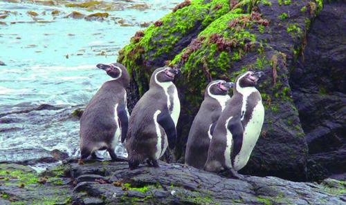 Científicos chilenos le solicitan a Piñera que avance en la creación de una zona de protección marina en La Higuera