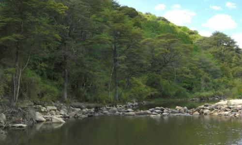 Finaliza pronto consulta ciudadana de Plan de Recuperación, Conservación y Gestión del Ruil