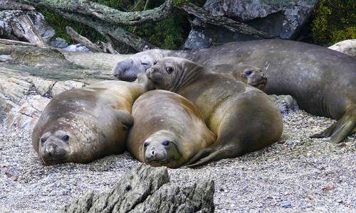 Consejo de ministros aprueba nueva área marina protegida en Seno Almirantazgo de Tierra del Fuego