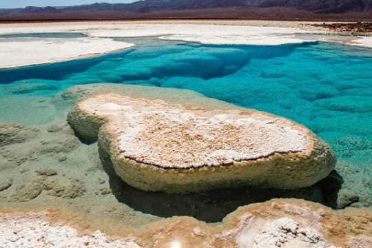 Investigadores descubren ecosistema en inédita laguna del desierto de Atacama
