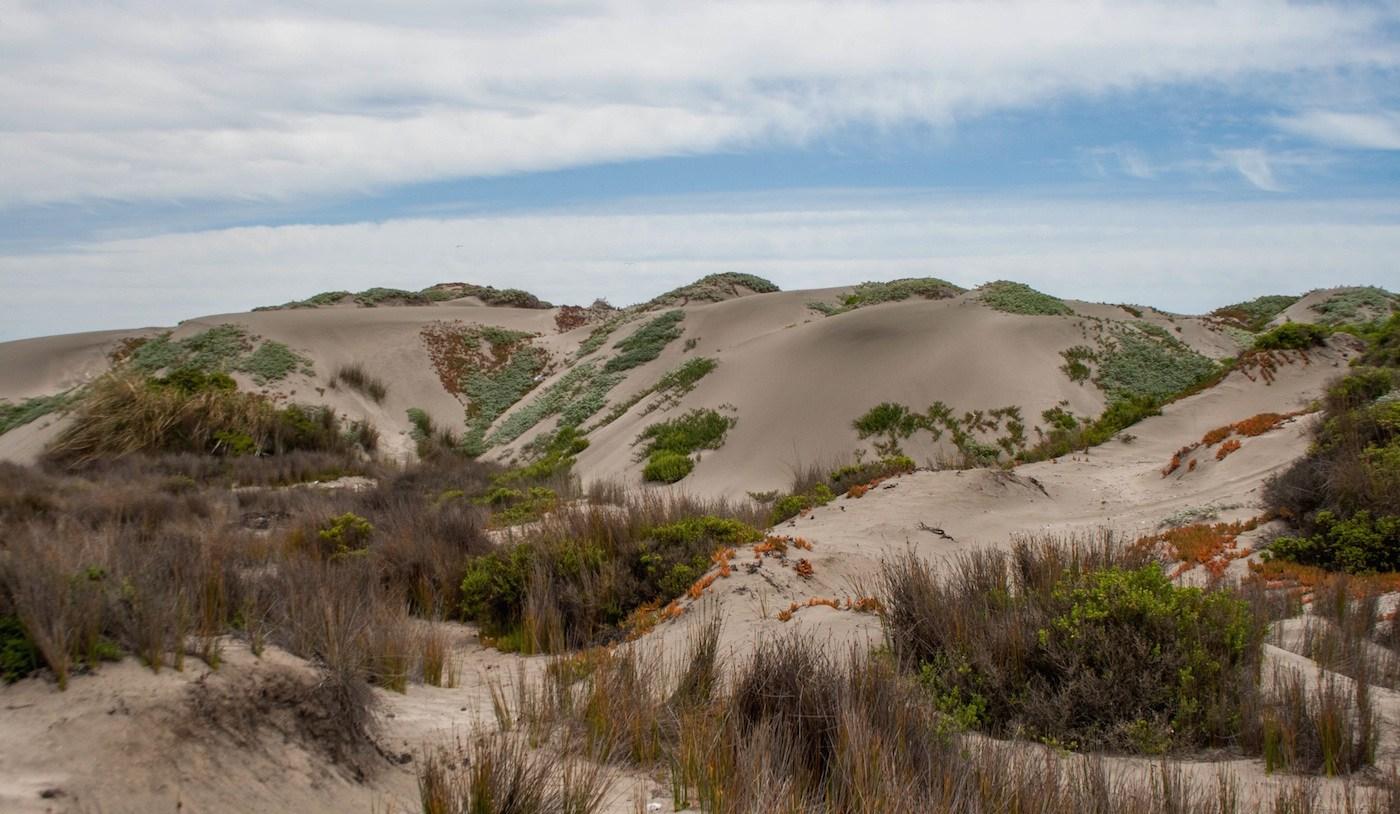 Tribunal Ambiental de Santiago autorizó la detención de las faenas de extracción de áridos en dunas de Ritoque