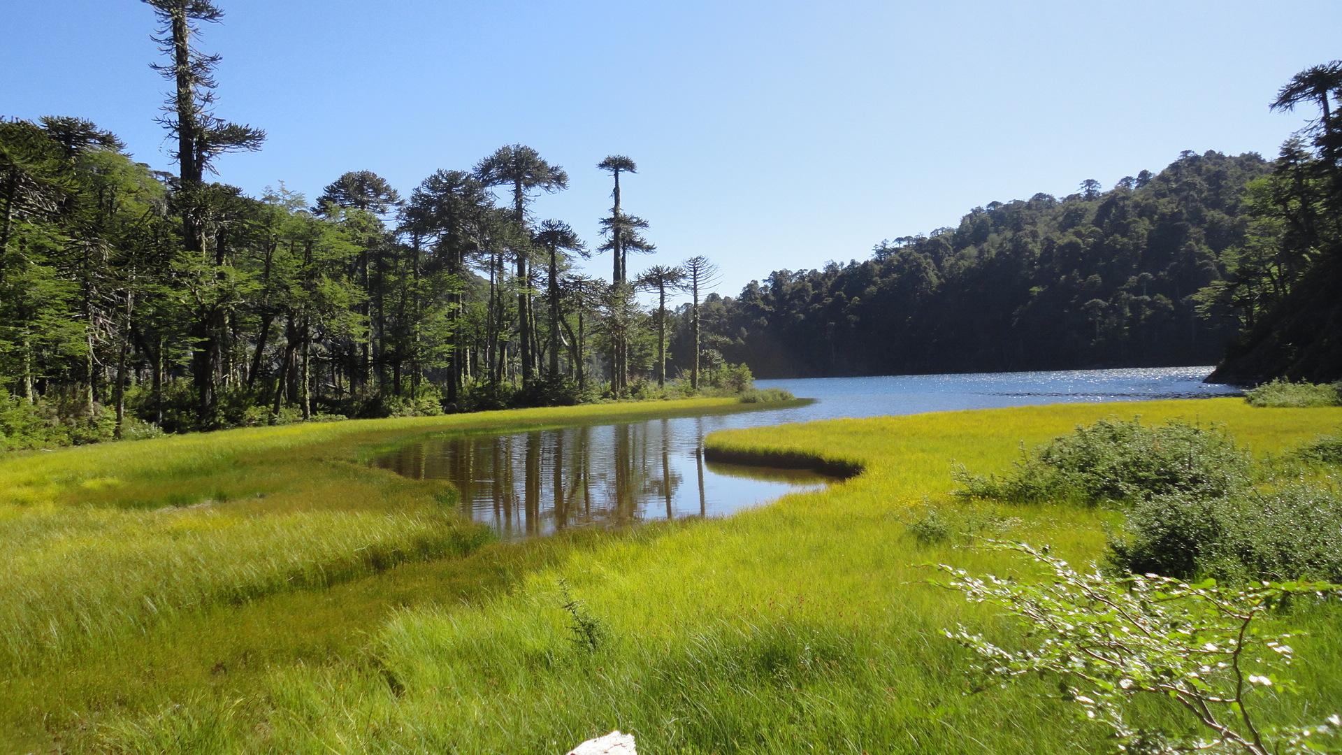 Análisis económico de los ingresos y egresos del Sistema Nacional de Áreas Silvestres Protegidas del Estado