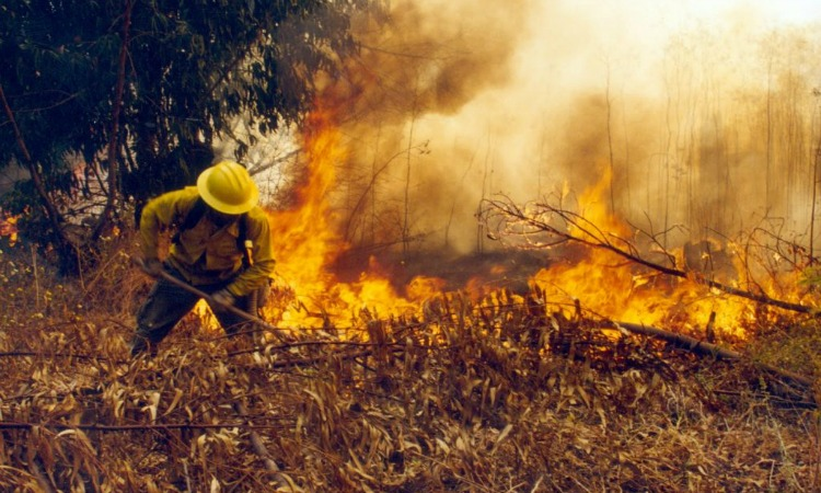 "Incendios: 12 regiones en ""estado preventivo de emergencia"""
