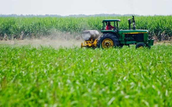 FAO crea alianza para la resiliencia de agricultores latinoamericanos al cambio climático