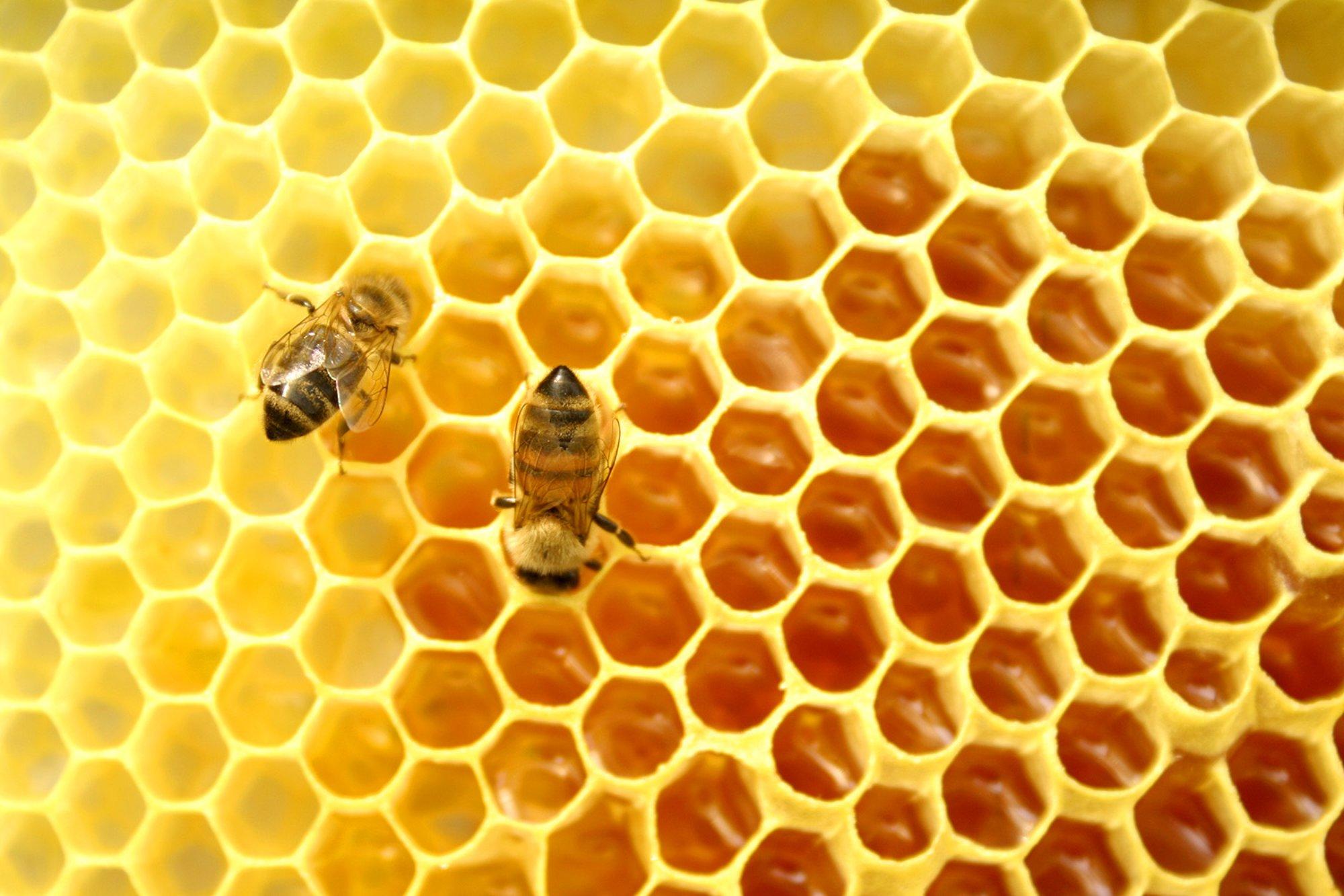 FAO: Chile tiene un déficit de 400 mil colmenas de abejas