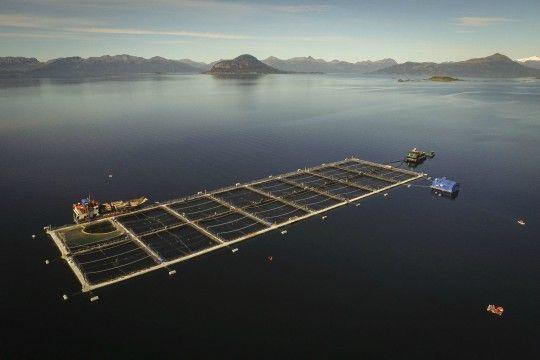 Casi el 14% de las cosechas chilenas de salmónidos es en Magallanes