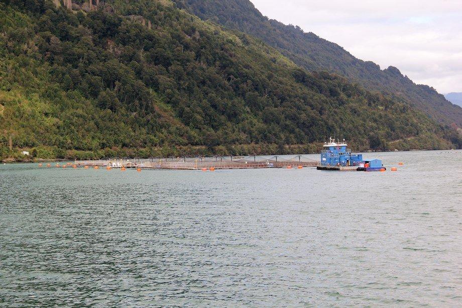 Caleta Bay responde a Sernapesca por uso de vacunas no registradas