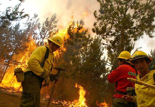 Profesionales de Conaf rechazan proyecto de ley que crea el Servicio Nacional Forestal