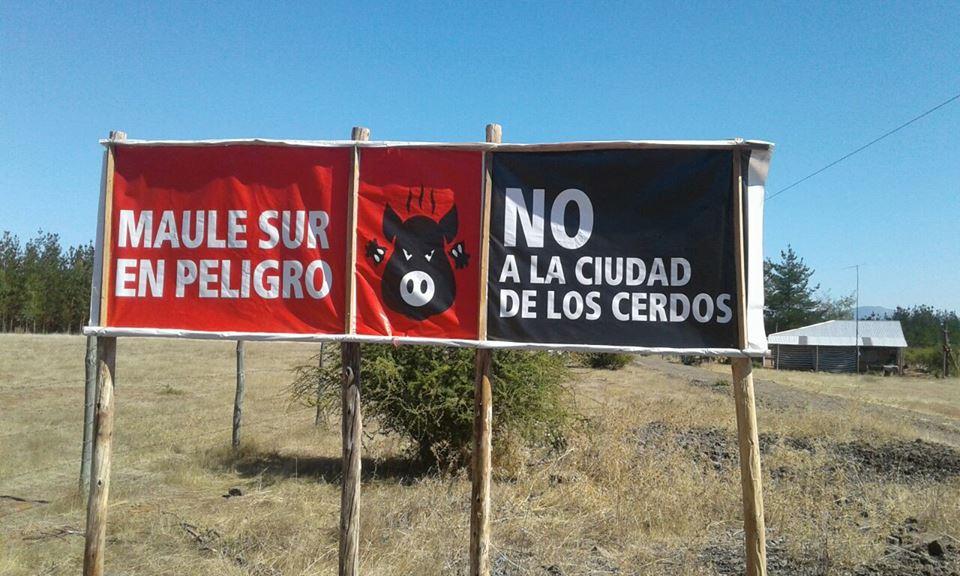 ¿Freirina II? Planta de cerdos tiene en alerta a San Javier